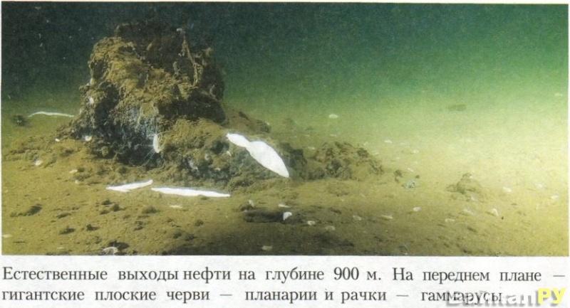 Естественные выходы нефти в Байкале на глубине 900 м